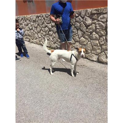 Comune di Altavilla Irpina - Cane - Microchip 380260043812694
